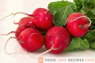 Radishes: benefits and harm to the body