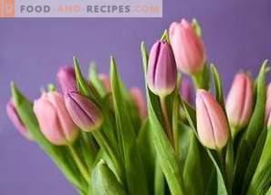 Como salvar tulipas cortadas