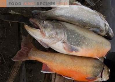 Рибена риба: полза и вреда
