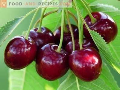 Сладки череши: ползи и вреди за здравето