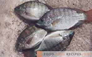 Риба тилапия: полза и вреда