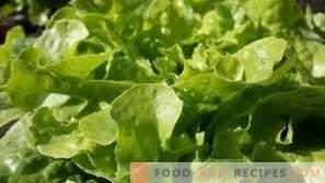 Как да съхранявате листната салата