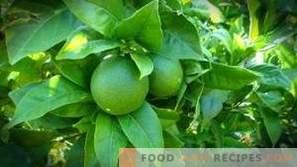Как лимонът се различава от вар?