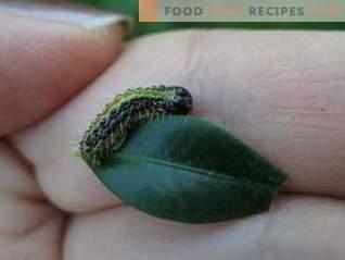 Lepidocide е ефективно лекарство срещу вредители, които се хранят с листа