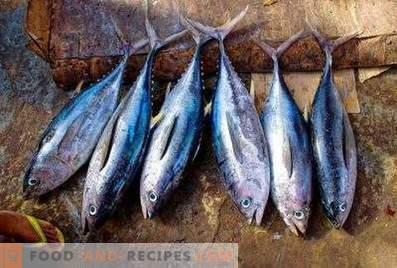 Риба тон: добро и вреда