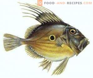 Дори риба: полза и вреда