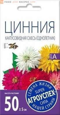 Циния - най-добрите сортове и особености на отглеждане